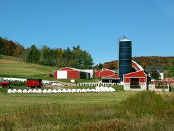 IRS Seizes Dairy Farm Accounts